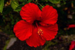 hi_flowers-6225_800w